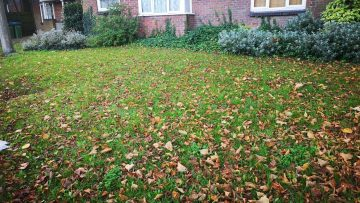 Autumn Leaf Blowing in South London